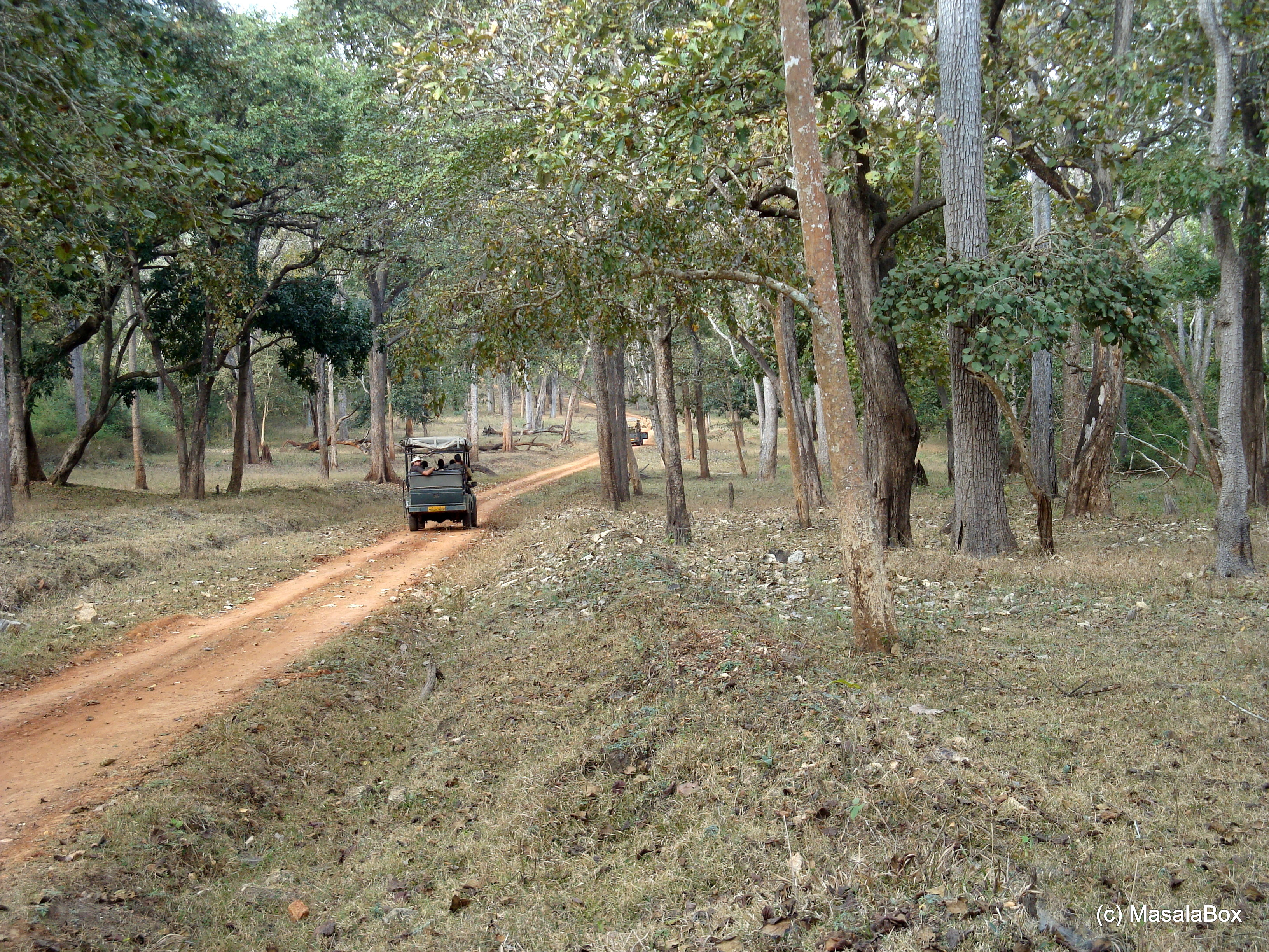 Waiting for the tiger. Jeep Safari