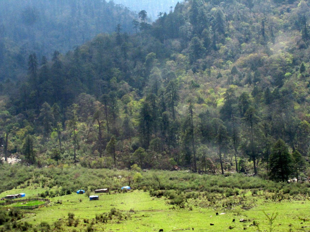 Bhutan Alpine Meadows