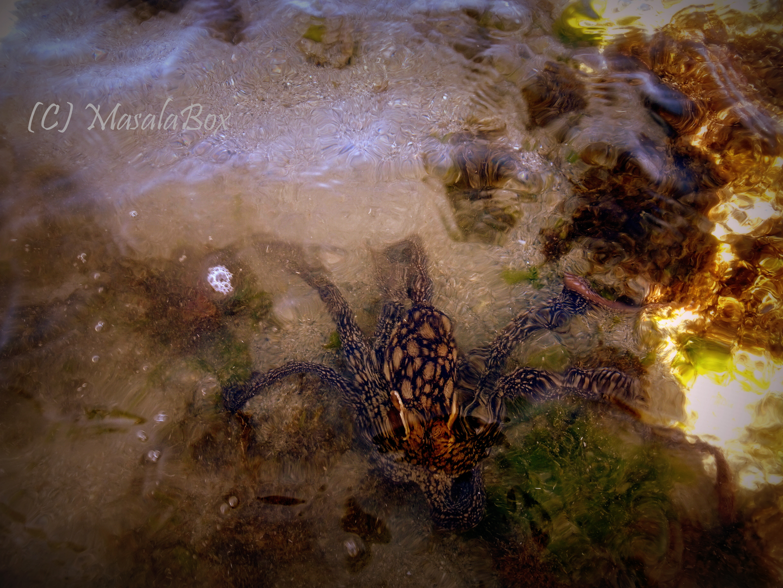My friendly Octopus find!