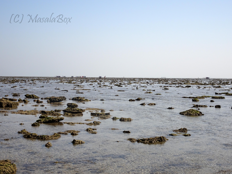 Jamnagar Water receded exposing rocks and marine life