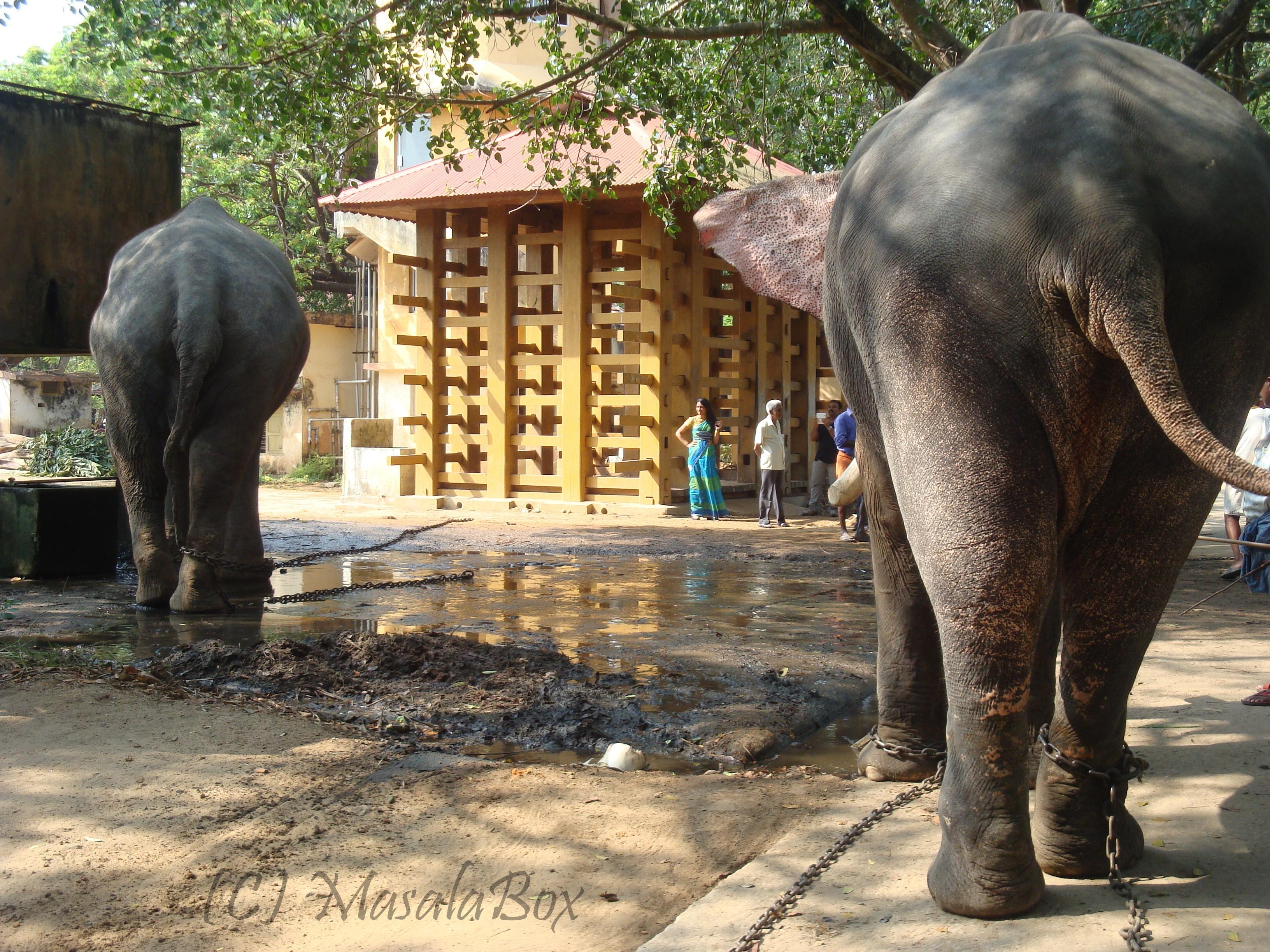 Earth day - punathurkota elephant camp