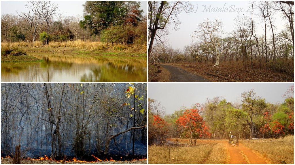 Tadoba forest