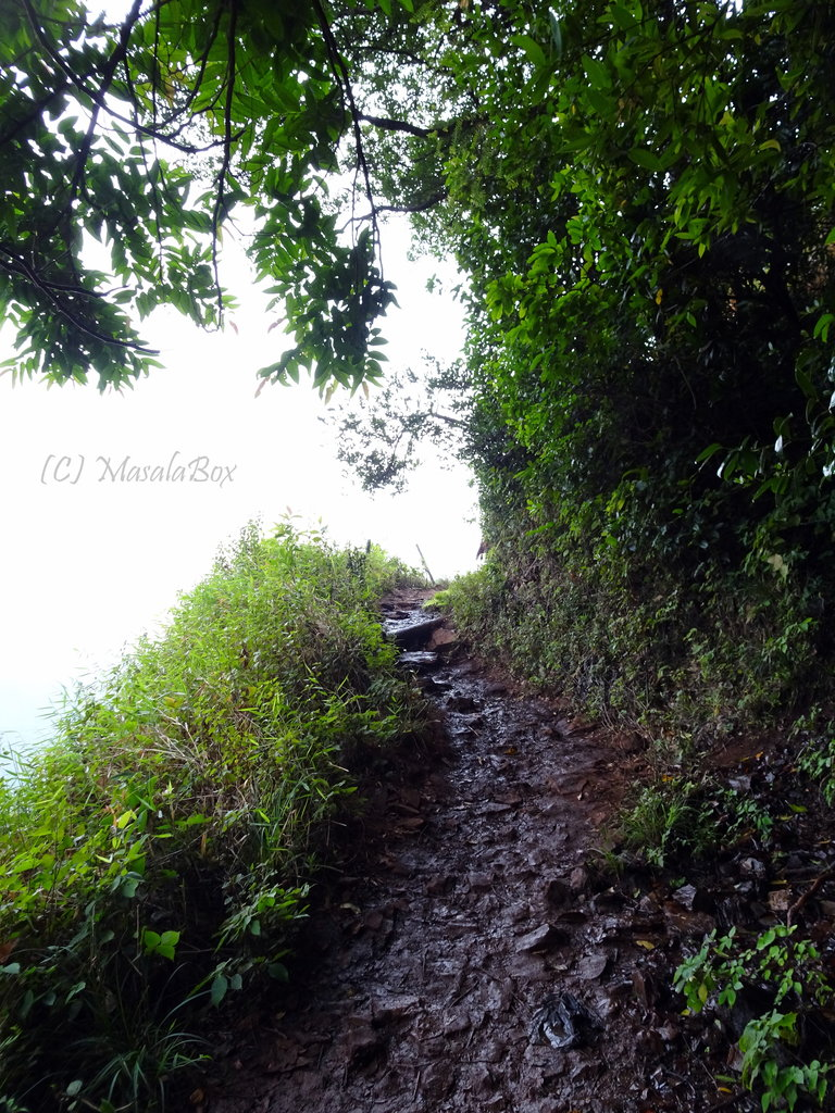 Chikmagalur - Kemmanagudi trek