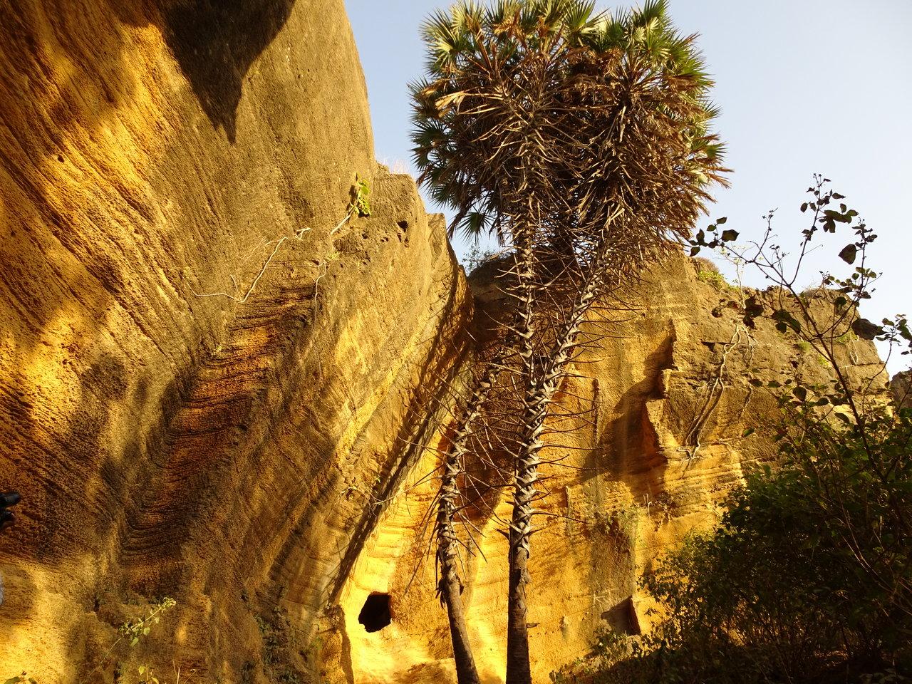 Naida caves - Hoka trees native to Diu