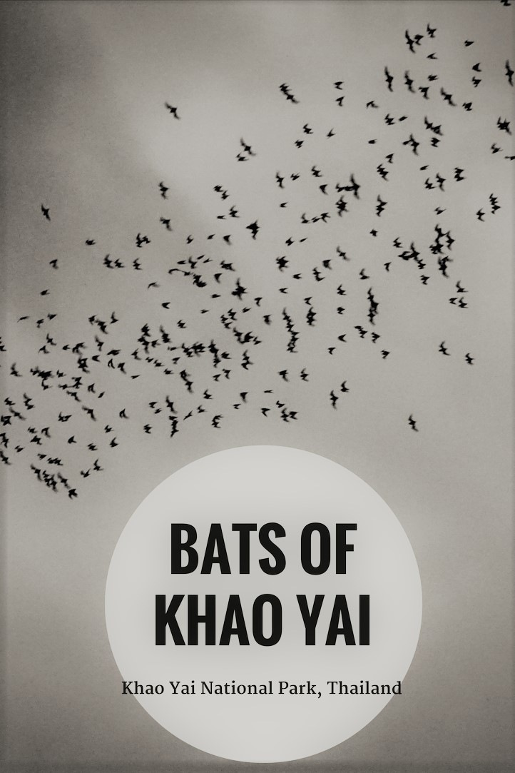 PIN - Bats of Khao Yai, Thailand