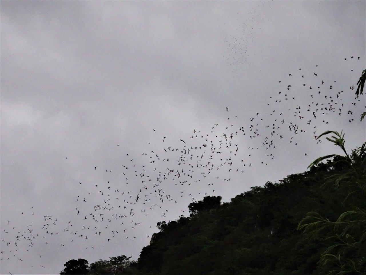 Bats emerging out