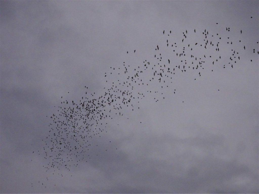 Bats of Khao Yai
