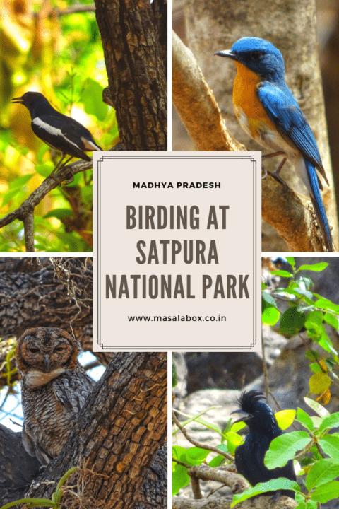 Birding pinterest satpura national park