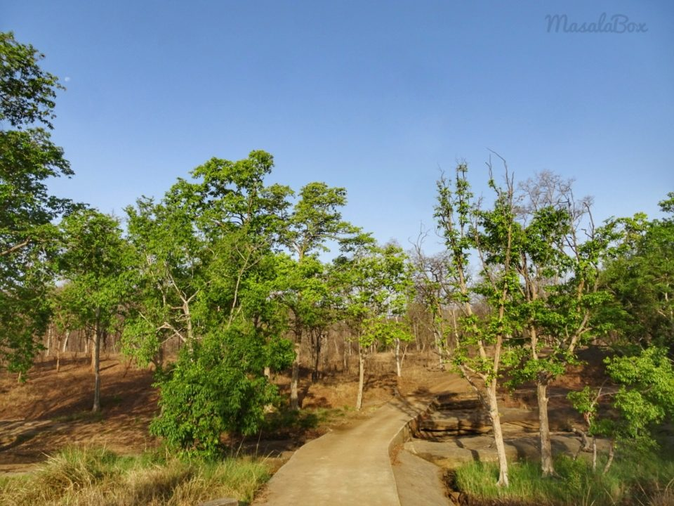 Terrains of Satpura National Park