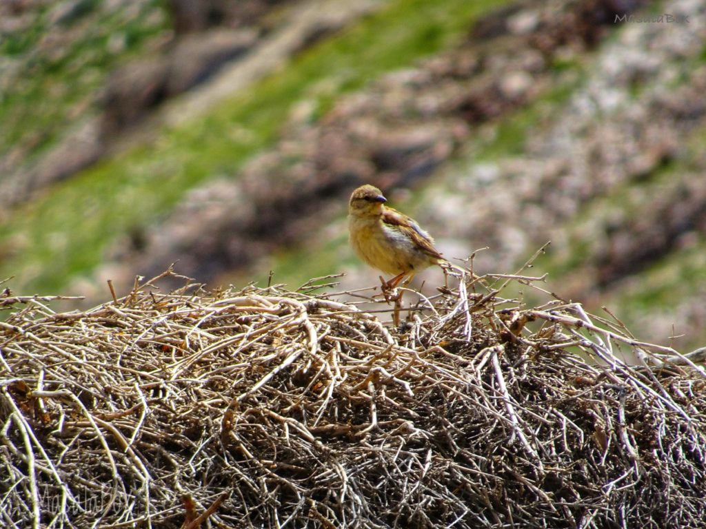 sparrow pin valley