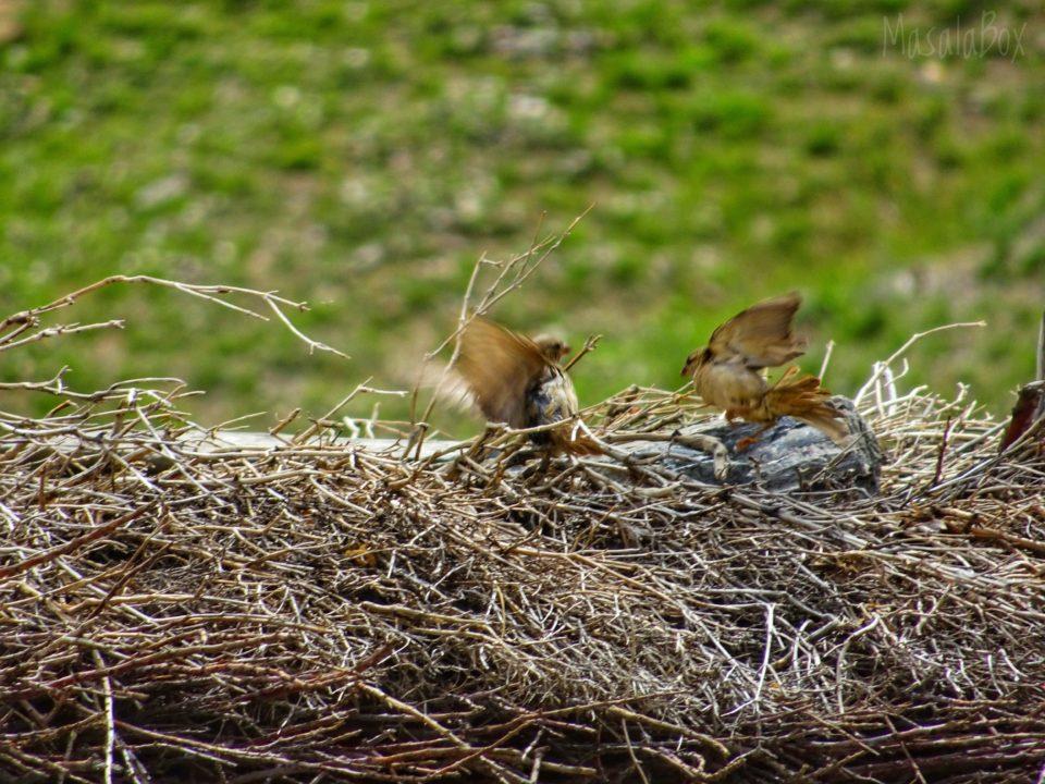 pin valley birds