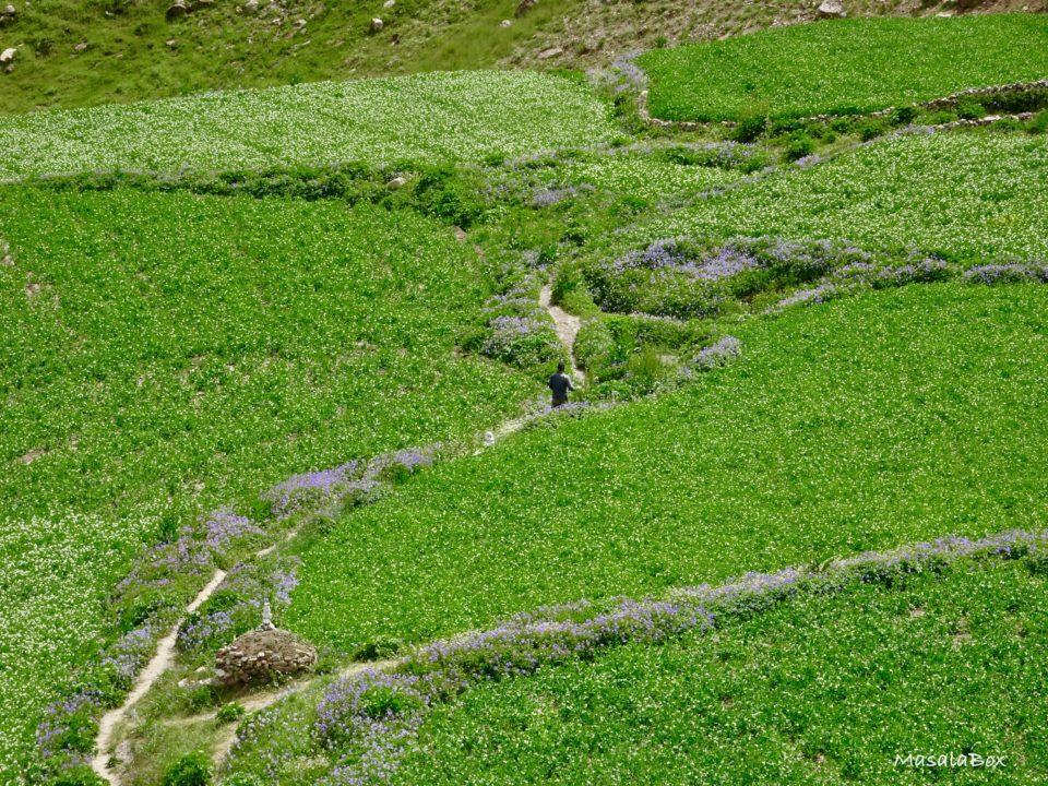 green farms pin valley