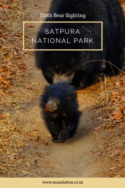 pinterest satpura national park