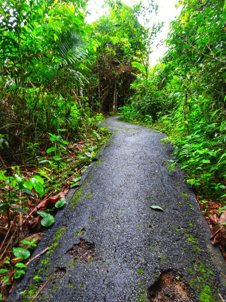 Khao Yai national park hike trail