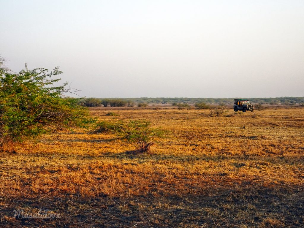 safari Little Rann