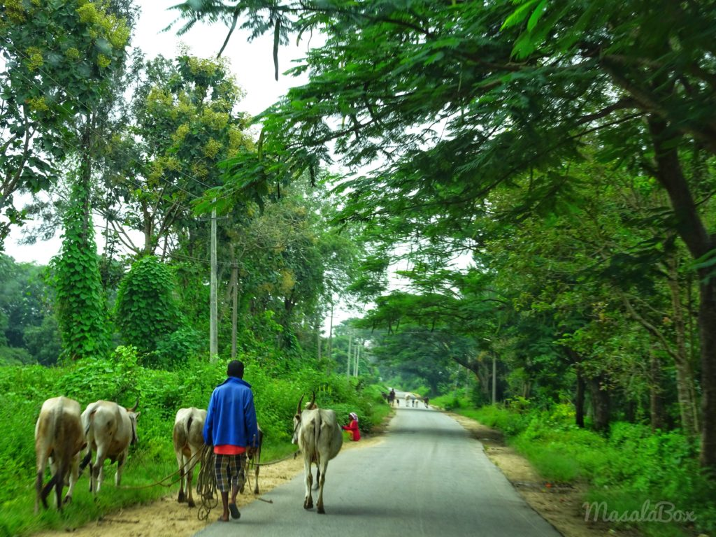 Villages scenes of Shettihalli
