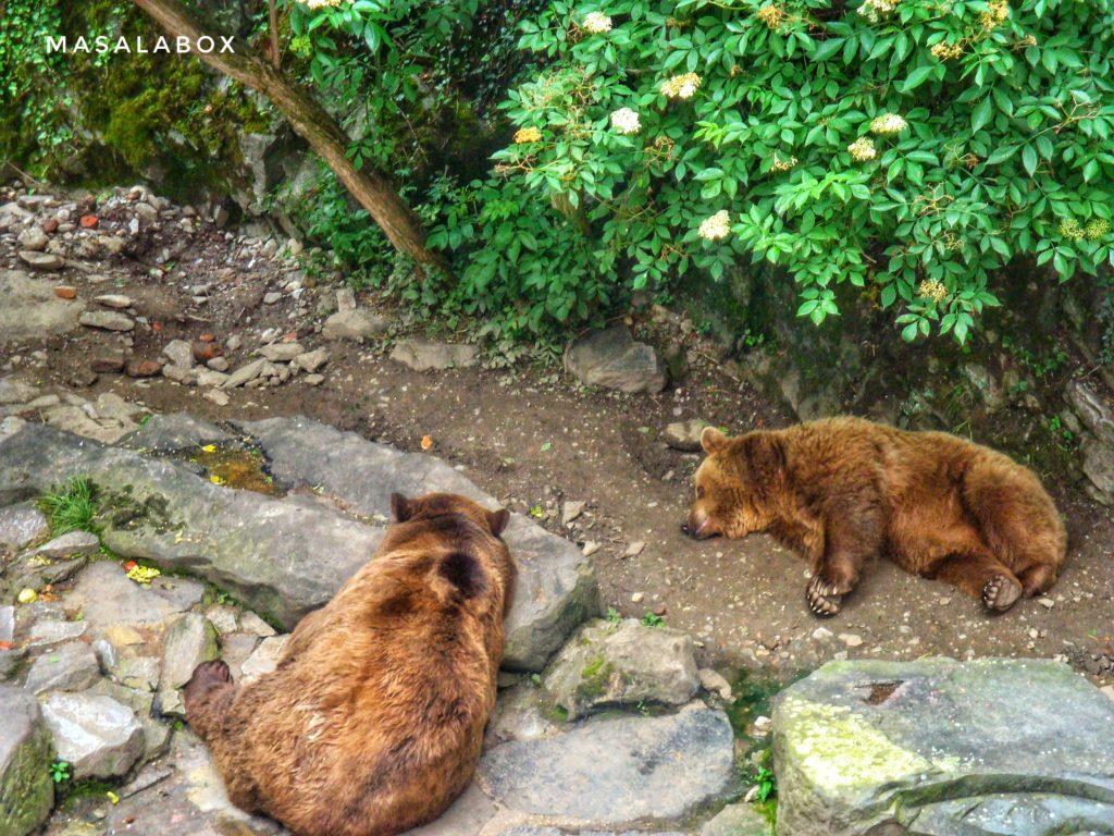 Cesky Krumlov bear moat