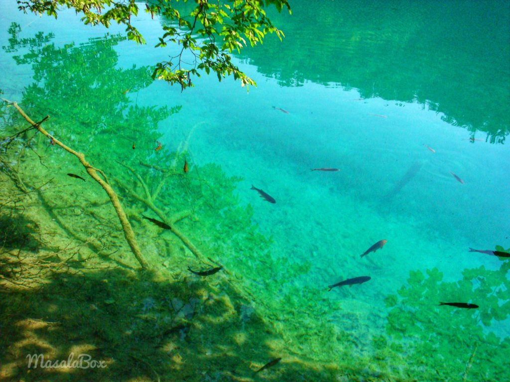 clear water fishes plitvice