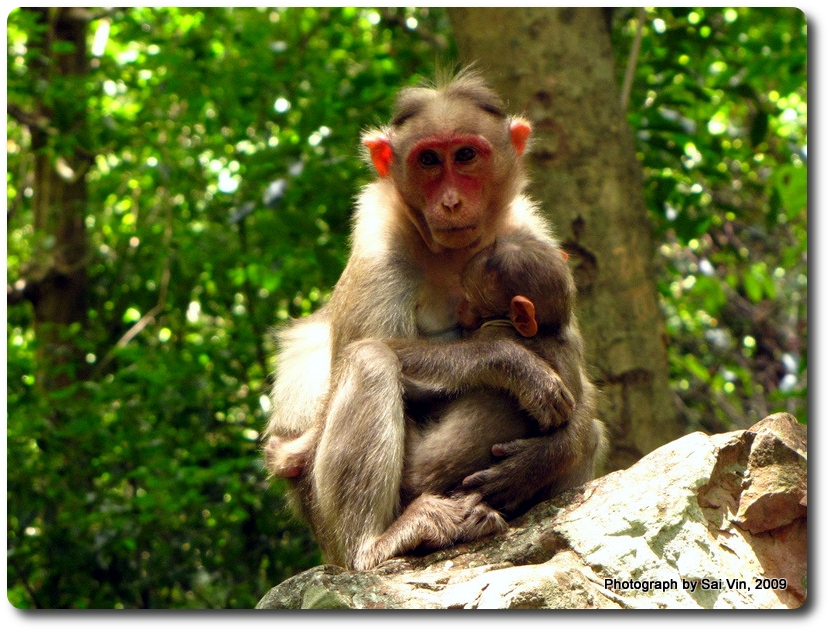 Monkey Talakona